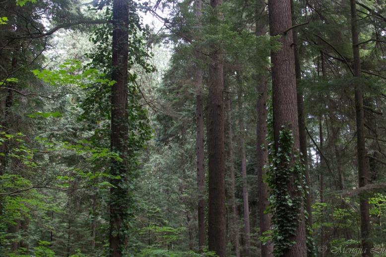 Forest Original